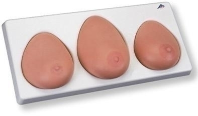 Breast Self Examination Model; Three Single Breasts On Base - L55 - Health Education Sexual Education L55