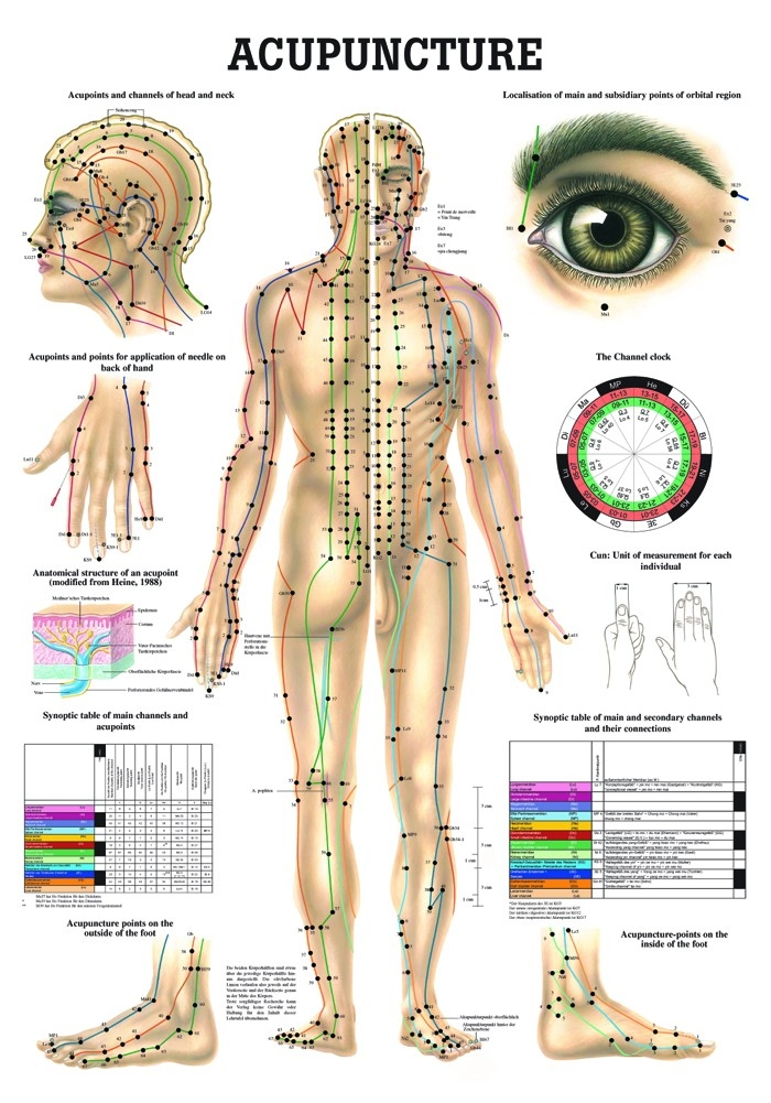 Human Acupuncture Laminated Chart - A-104188 - Anatomical Charts & Posters Acupuncture & Reflexology Charts A-104188